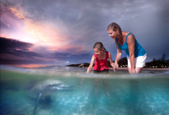 Web Tangalooma Island Resort Dolphin Adventure hero